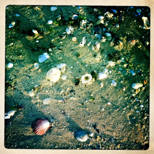 11 sea treasures